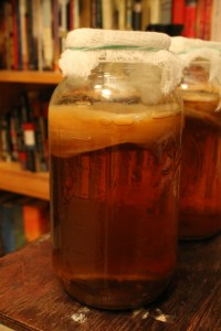 resized kombucha