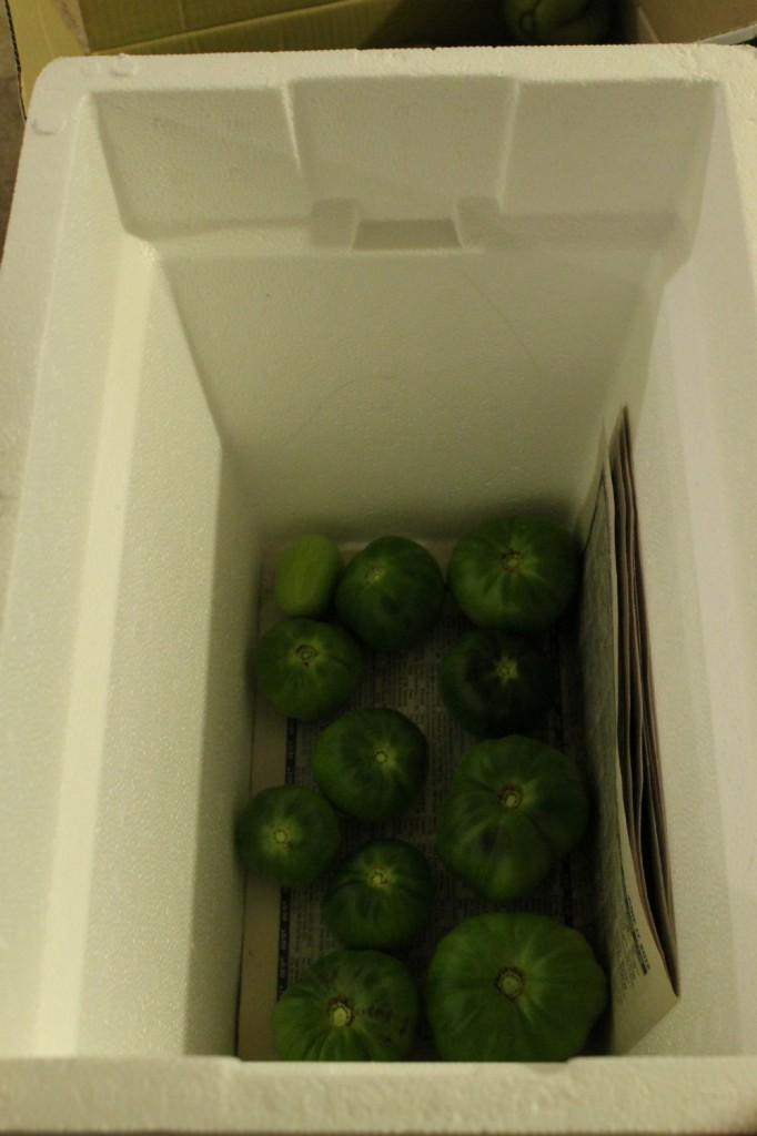 full green tomatoes