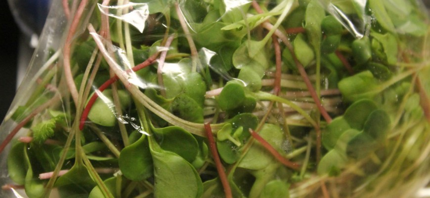 microgreens resized