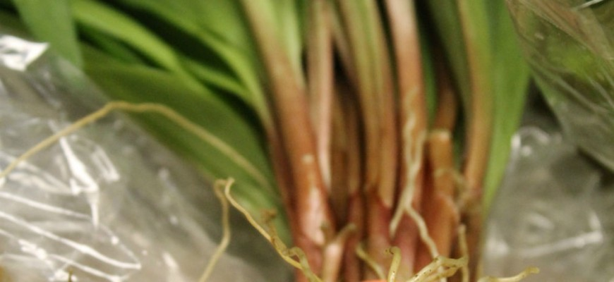 ramps resized